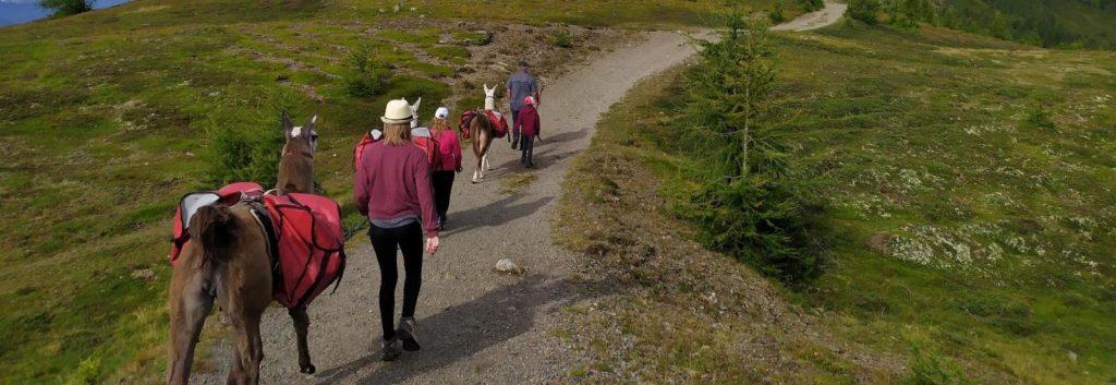 Kindergruppe wandert mit Lamas